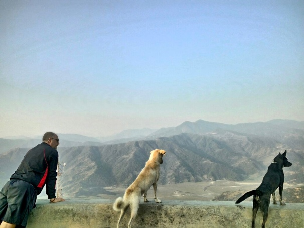 Man and dogs staring at mountains